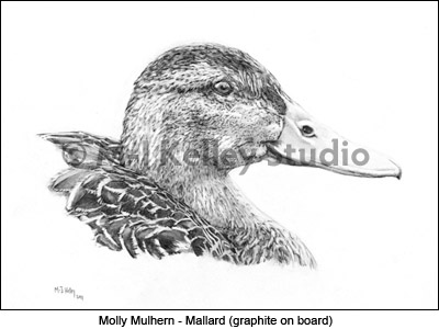 Molly Mulhern - Mallard (graphite on board) by M-J Kelley