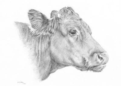 M-J Kelley's realistic drawing of a cow. Graphite.
