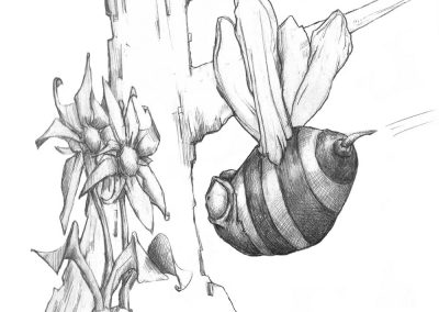 M-J Kelley's drawing of a bee heading for flowers. Graphite.