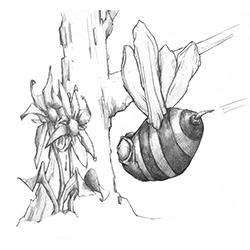 InkTober – Day 5 – Beeline