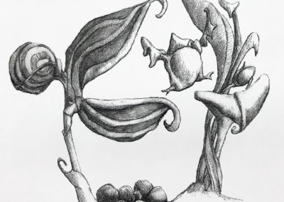 M-J Kelley's drawing of a fledgling bird leaping. Graphite.