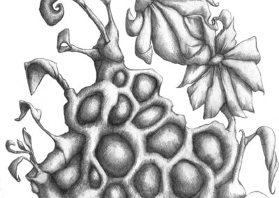 M-J Kelley's drawing of two flowers entangled. Graphite.