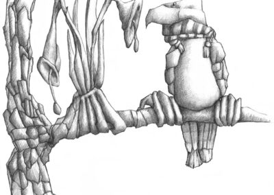 M-J Kelley's drawing of a eloquent bird with a scarf with tassels. Graphite.