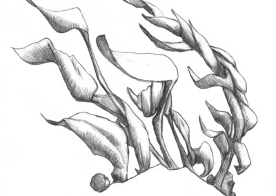 M-J Kelley's drawing of the wind blowing through the grasses. Graphite.