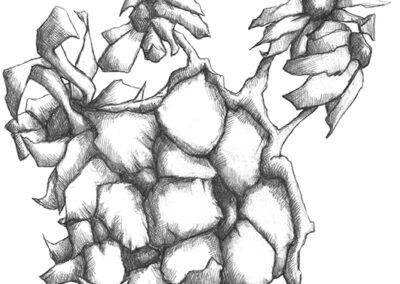 M-J Kelley's pencil drawing of a group of flowers bunched together.