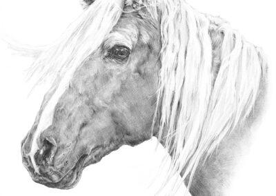 M-J Kelley's drawing of a horse named Buckshot. Graphite.