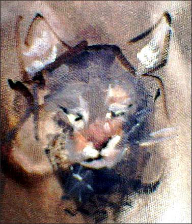 M-J Kelley's quick study of a farm cat named Bubba. Oil on canvas.