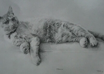M-J Kelley's drawing of Frank, the house cat. Graphite.