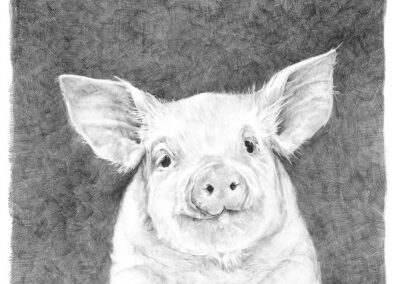 M-J Kelley's drawing of a young pig named Oinklett. Graphite on paper.
